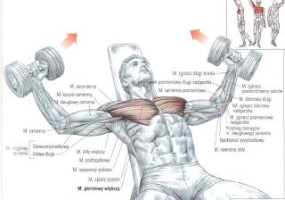 Siłownia – zestaw treningowy wprowadzający